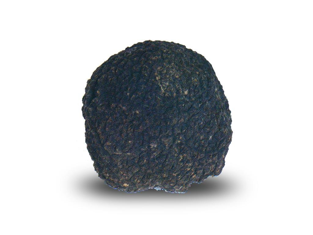 Prized black truffle